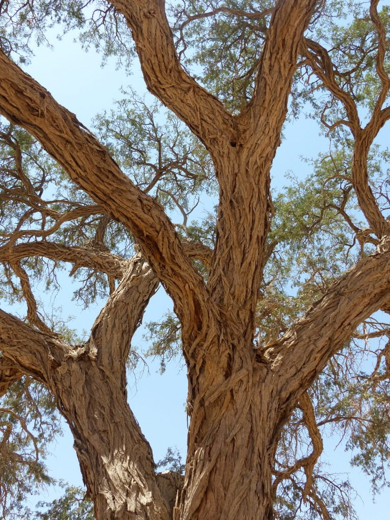 Tree, Namibia