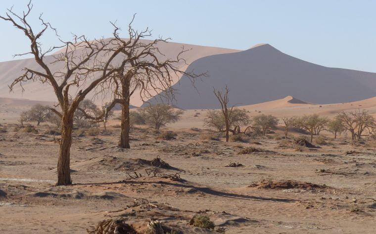 Dead Vlei, Sossusvlei, Namibia, Africa