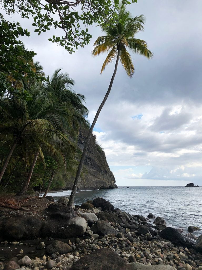 Lone Palm on the beach, Martinique, Caribbean