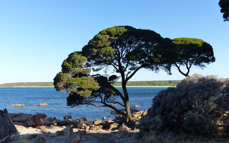 Bunker Bay, WA, Australia
