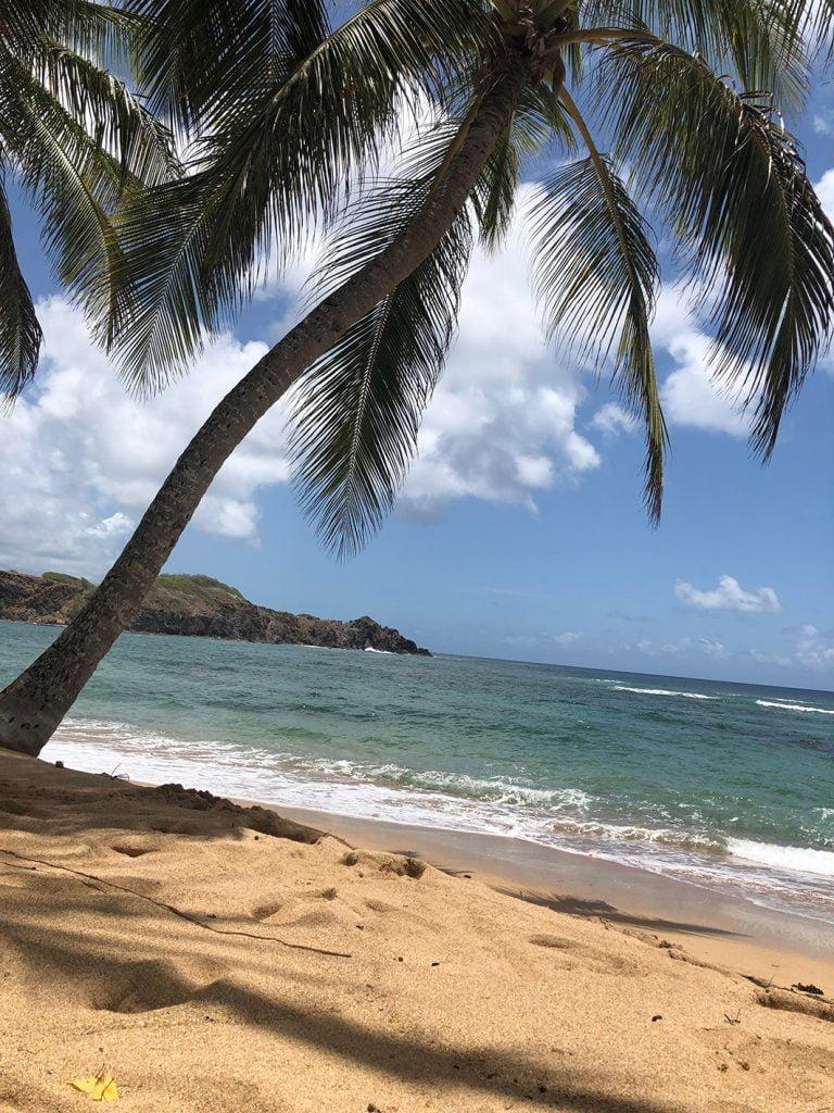 Palm Tree Beach, Martinique, Caribbean