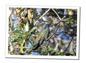Beautiful bird An Amazing 2 Day Homestay in Lake Titicaca Uros Reed Island People Taquiles Island